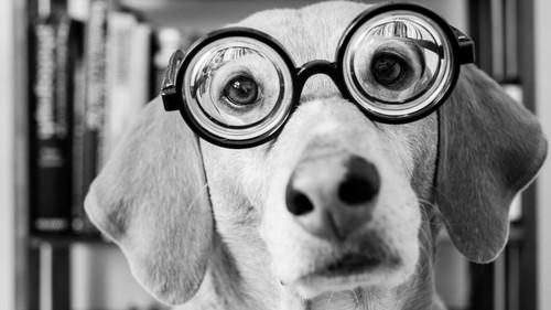 Αυτά είναι τα 10 πιο έξυπνα σκυλιά στην πιάτσα