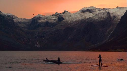 Βουτιές και kite surfing δίπλα στις φάλαινες του Αρκτικού Ωκεανού