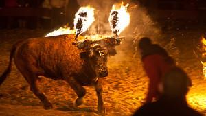 Η αυτοκτονία αυτού του ταύρου δείχνει πόσο ζώα είμαστε