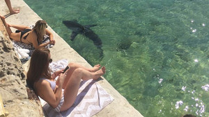 Ένας καρχαρίας, λίγο χομπίστας, μπούκαρε σε μια πισίνα στο Σίδνεϋ