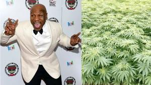 Δεν ξέρουμε τι συνέβη στον Μάικ Τάισον αλλά το γύρισε στην καλλιέργεια μαριχουάνας